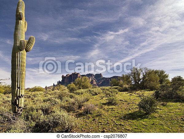 Desert saguaro cactus tree  - csp2076807