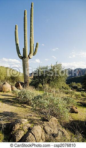 Desert saguaro cactus tree  - csp2076810