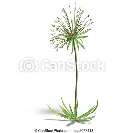 Papyrus Plant Drawing Papyrus Csp2077413