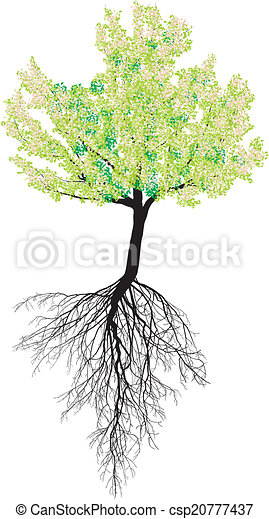 Flowering cherry tree with roots - csp20777437