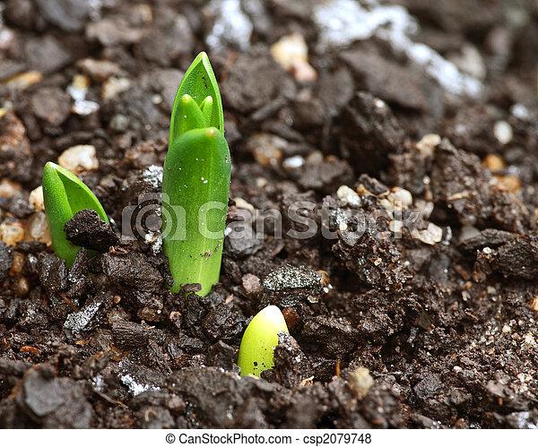 little sprout bud in garden - csp2079748