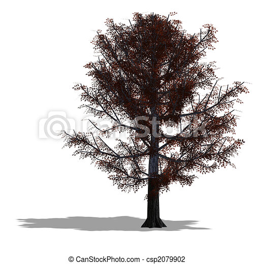 clip art de ch ne arbre rendre de a arbre ombre et lipping csp2079902. Black Bedroom Furniture Sets. Home Design Ideas