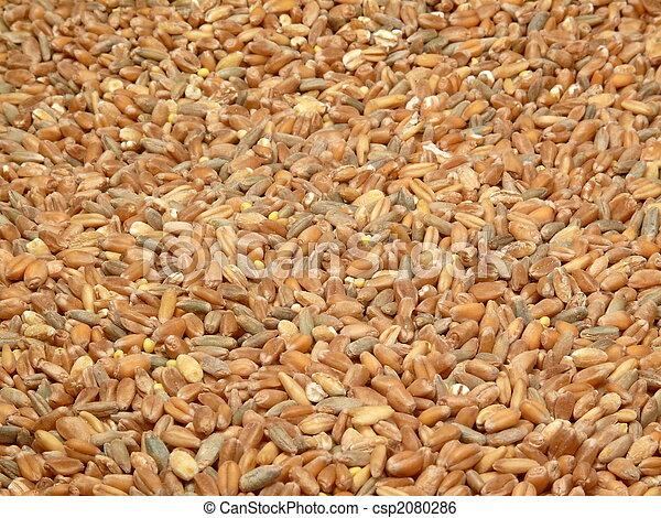 grain background - csp2080286