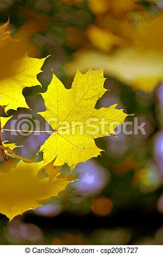 Maple fall leaf - csp2081727