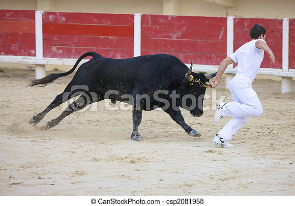 Saintes Maries de la Mer, La Camargue, Provence, France, Europe - october 29, 2008: bullfight in the arena of Saintes Maries de la Mer, La Camargue, Provence, Frankreich, Europa - csp2081958