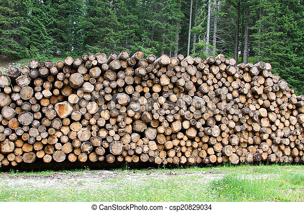 logs cut by loggers in the mountains for the furniture industry