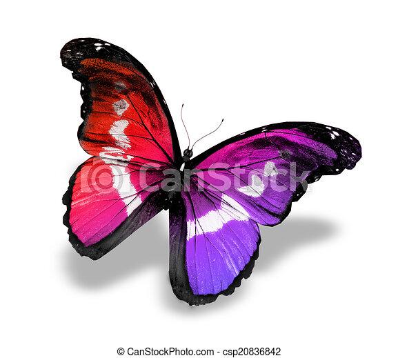 Dessin de bleu papillon blanc morpho isol couleur - Papillon dessin couleur ...