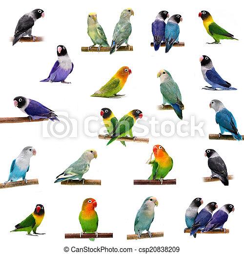 Set Lovebirds on white - csp20838209