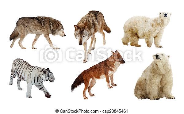 Carnivora mammals. Isolated over white   - csp20845461