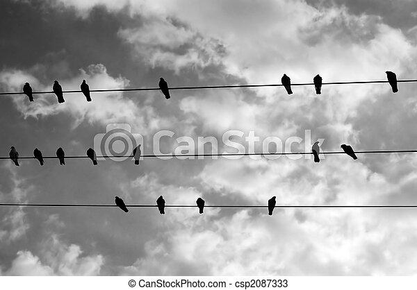 drót, madarak - csp2087333
