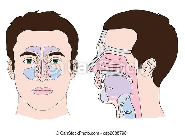 nose and throat - csp20887981