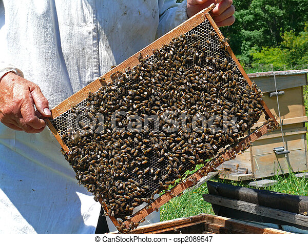 A close-up of the honeycomb with bees. Russian Far East, Primorye.