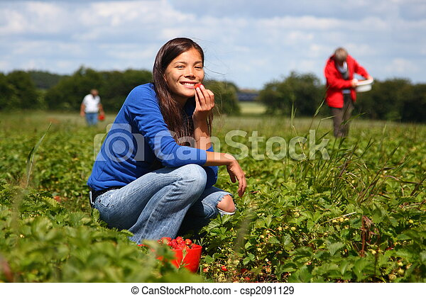 Picking strawberries - csp2091129