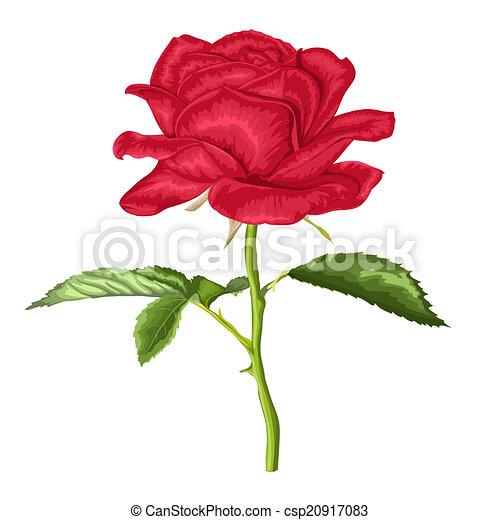 Long stem rose Illustrations and Clip Art. 210 Long stem rose ...