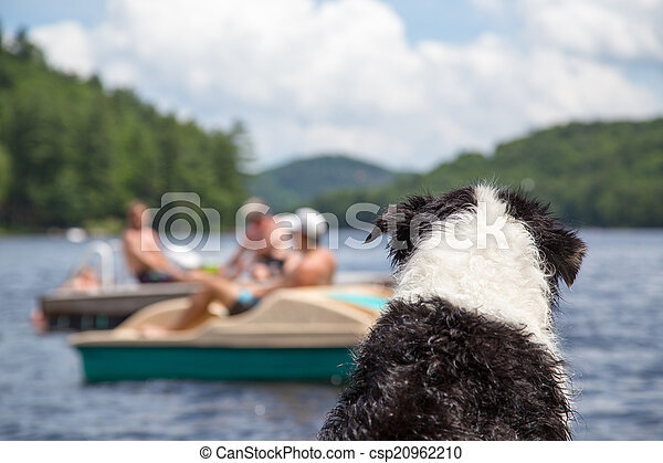 Dog watches activity on the lake - csp20962210