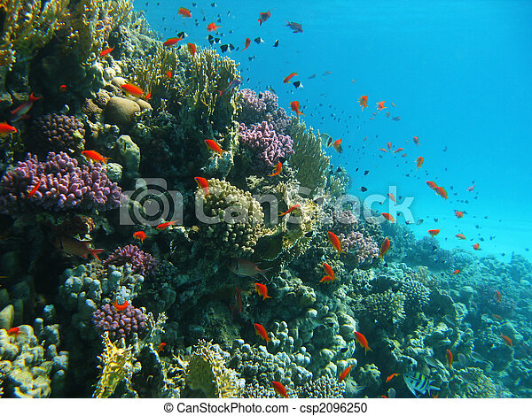 Coral reef and tropical fishes - csp2096250