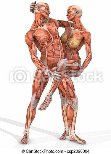 dessin de corps couple femme m le anatomique 3d computer csp2098004 recherchez. Black Bedroom Furniture Sets. Home Design Ideas