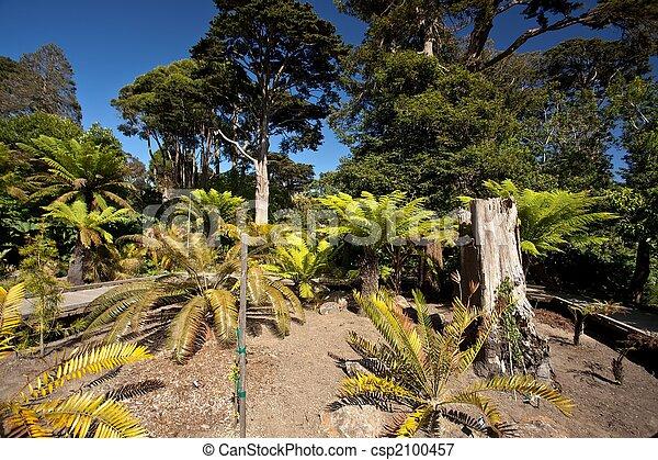 SF Botanical Garden - csp2100457