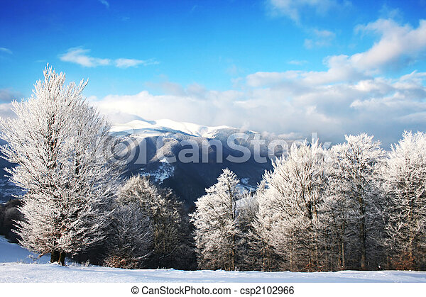 Winter Scenics - csp2102966