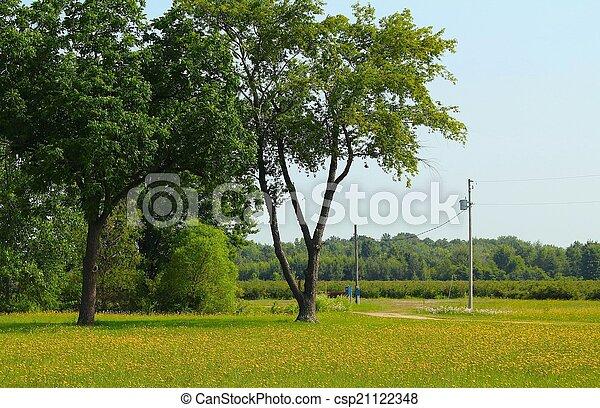Blueberry Bushes Michigan