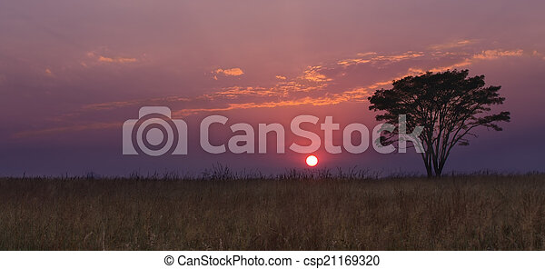 Cold morning sunrise with trees, grass with purple cloud - csp21169320