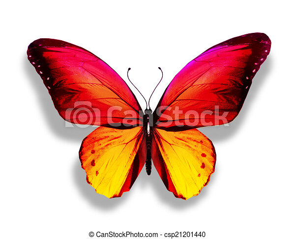 butterfly on yellow color - photo #19