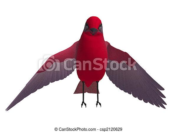 Red SongBird - csp2120629