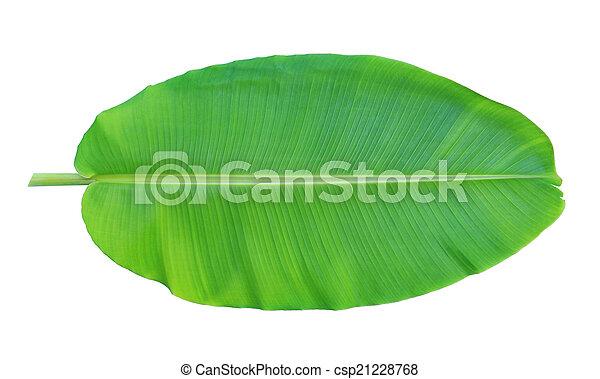 Banana leaf isolated on white background - csp21228768