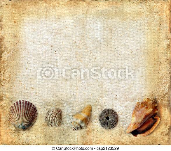 Sea Shells on Bottom of a Grunge Background - csp2123529