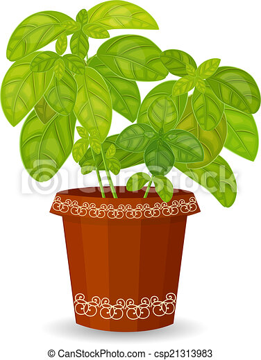 Vettore di basilico erba vaso fiore fresco fresco for Basilico vaso