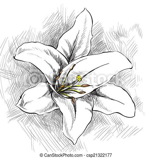 White lily - csp21322177