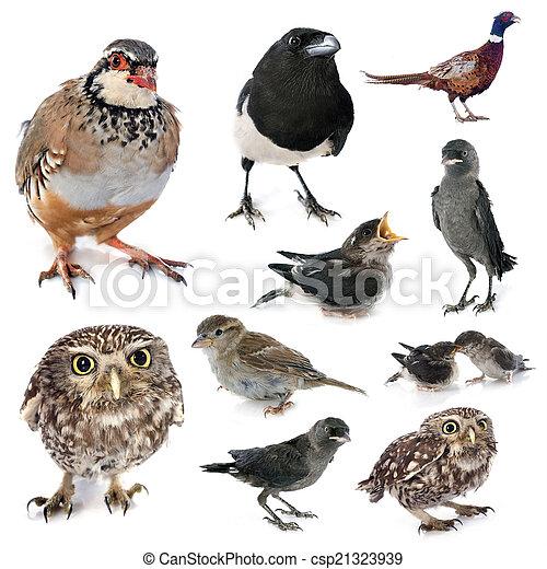 group of wild birds - csp21323939