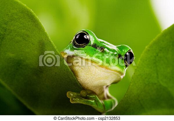 Frog peeking out - csp2132853