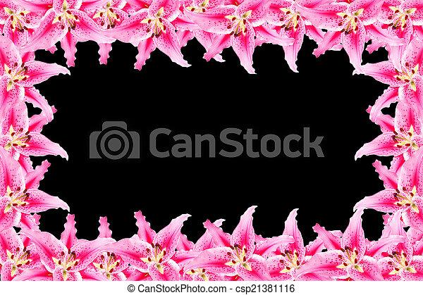 pink lily frame on black background