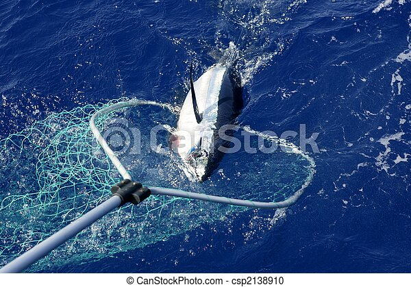 Blue fin tuna Mediterranean fishing and release  - csp2138910