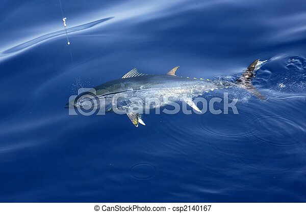 Blue fin tuna Mediterranean fishing and release  - csp2140167