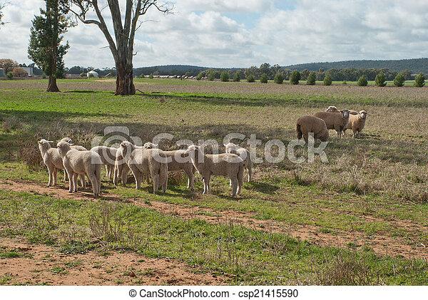 哺乳動物 - csp21415590