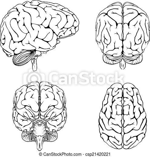 brain line drawing top - photo #12