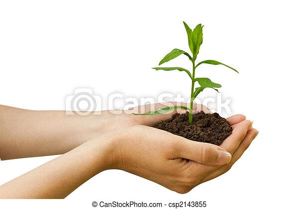Pflanze, landwirtschaft,  Hand - csp2143855