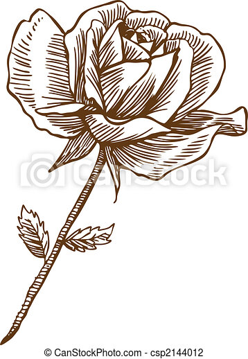 Rose Drawing One - csp2144012