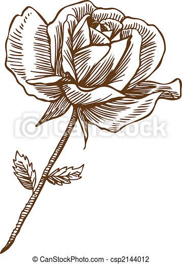 Rose Drawing One - csp2144012
