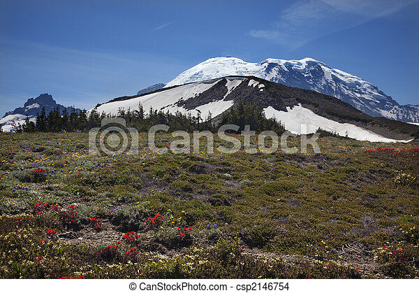 Mount Rainier Sunrise Wildflowers Snow  - csp2146754