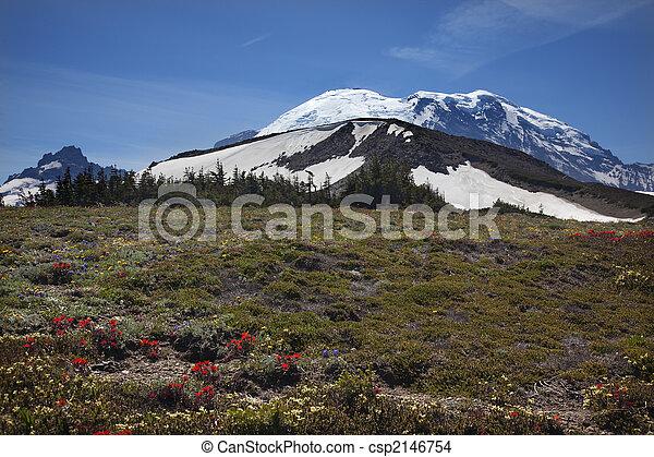 Mount Rainier Sunrise Wildflowers Snow  - csp2146754