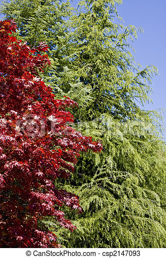 Red Tree and Green Tree - csp2147093