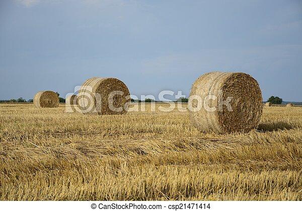 Haystacks in a field