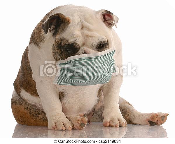 dog wearing medical mask - csp2149834