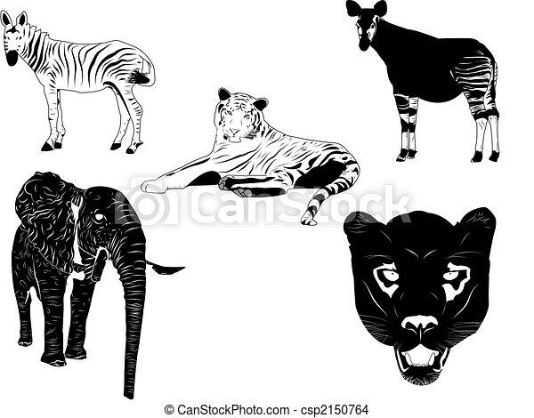 Wild animals - csp2150764