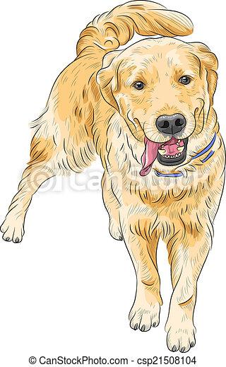 Clipart vecteur de croquis labrador race chien vecteur sourire heureux csp21508104 - Dessin golden retriever ...