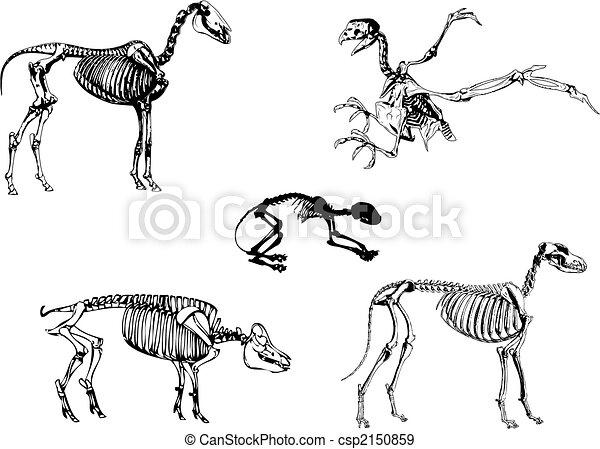 EPS vectores de animal...