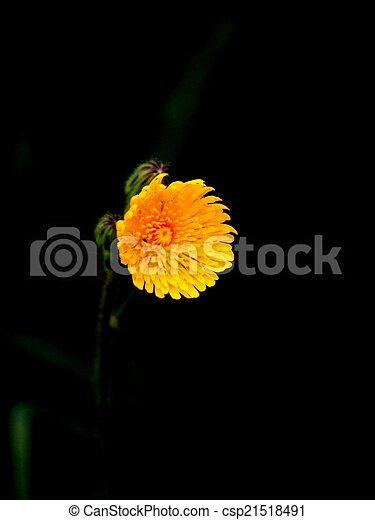 Fleur jaune - csp21518491